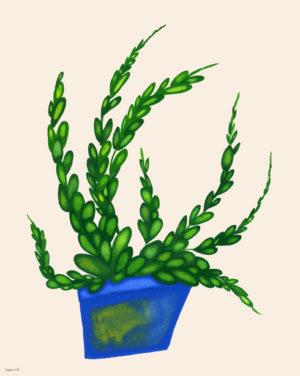 青い鉢の植物